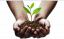 ac13bfb0d9fc8183991190a758e9f970_download-full-size-tree-growing-in-hand-clipart_656-390.png